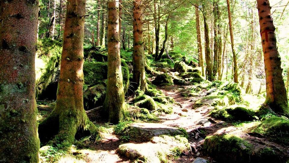 Сказочный лес. Норвегия
